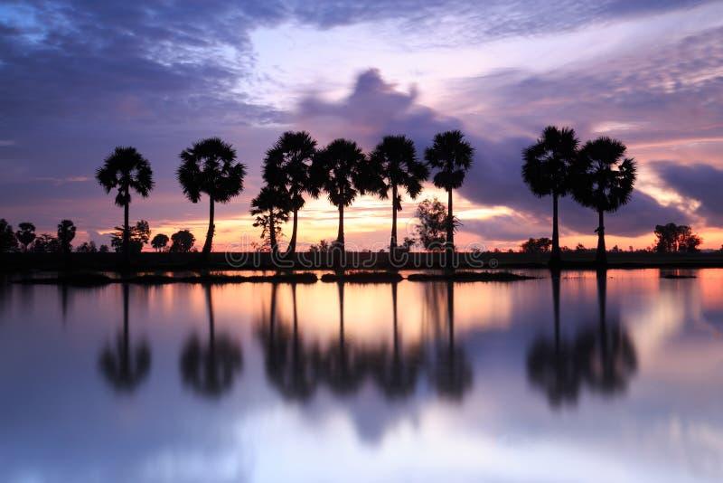 Färgrikt soluppgånglandskap med konturer av palmträd på Cha arkivbild