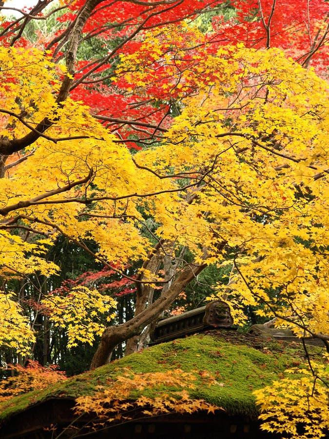 färgrikt tempel för kotoinlönnmoss arkivfoto
