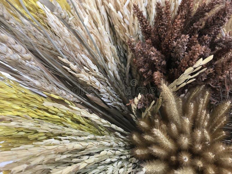 Färgrikt torkat öra av ris, vete och gräs arkivfoton