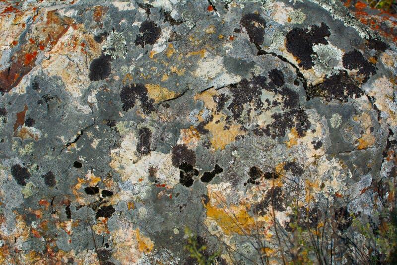 Färgrikt vagga stenmossatextur arkivfoto