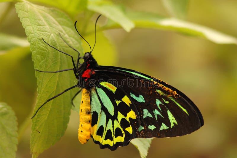 Färgrikt vila för fjäril royaltyfri bild