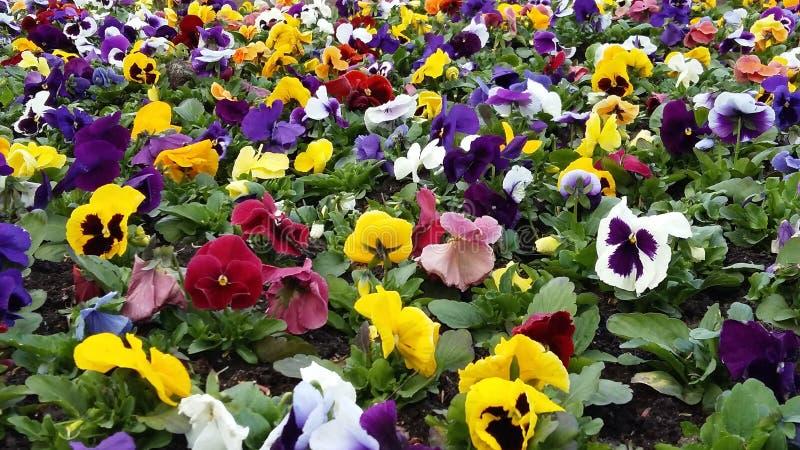 Färgstänk av blommor arkivbilder