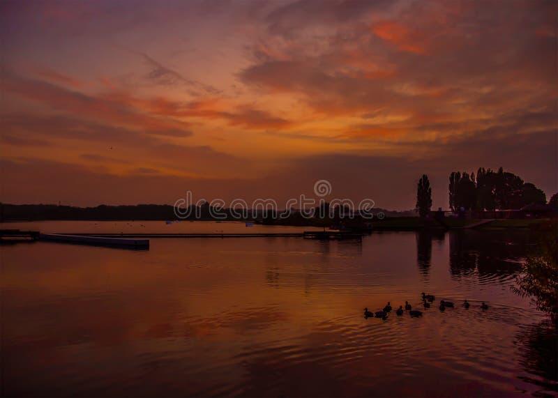 Färgstark soluppgång med svans och gäss vid Willen Lake, Milton Keynes royaltyfria foton