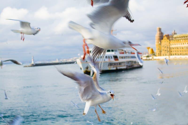 Färja med seagulls i kanalen av bosporus i kalkon arkivfoto