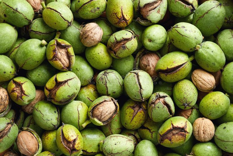 Färsk skörd av valnötter med grönt skal arkivbilder