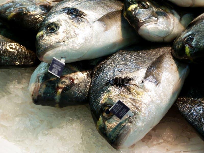 Färsk vit fisk och silverfisk på fiskmarknaden royaltyfri fotografi