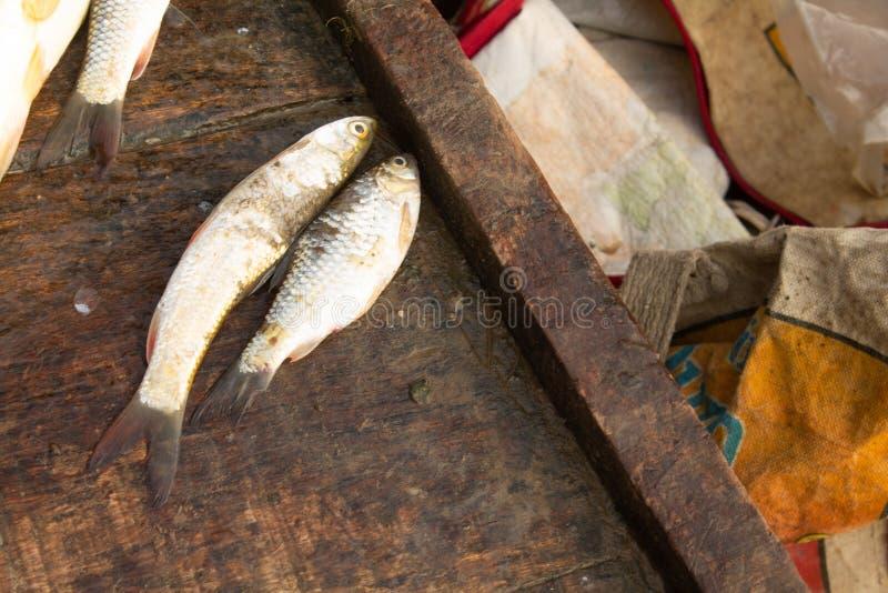 Färska fiskar royaltyfri bild