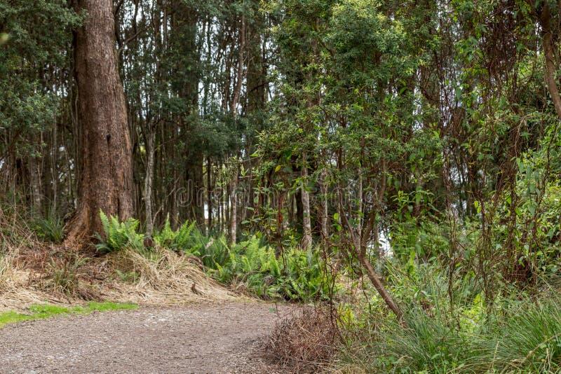 Färska räkor vid basen av träd i Srahan Tasmania Australien arkivfoto