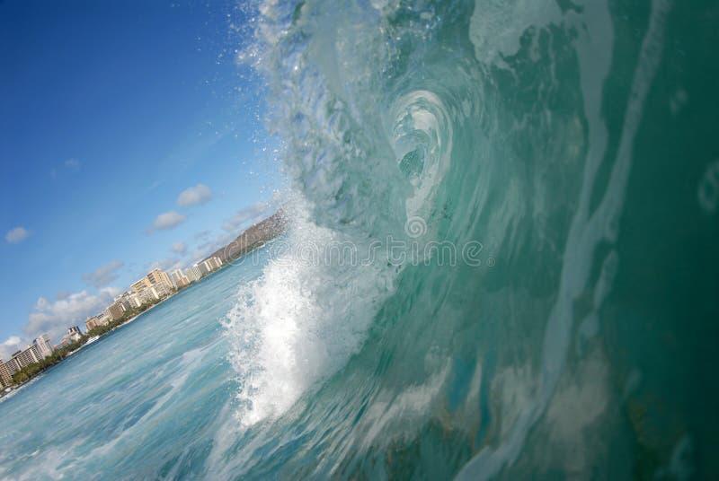 Fässerfüllenwelle In Hawaii Kostenlose Stockbilder
