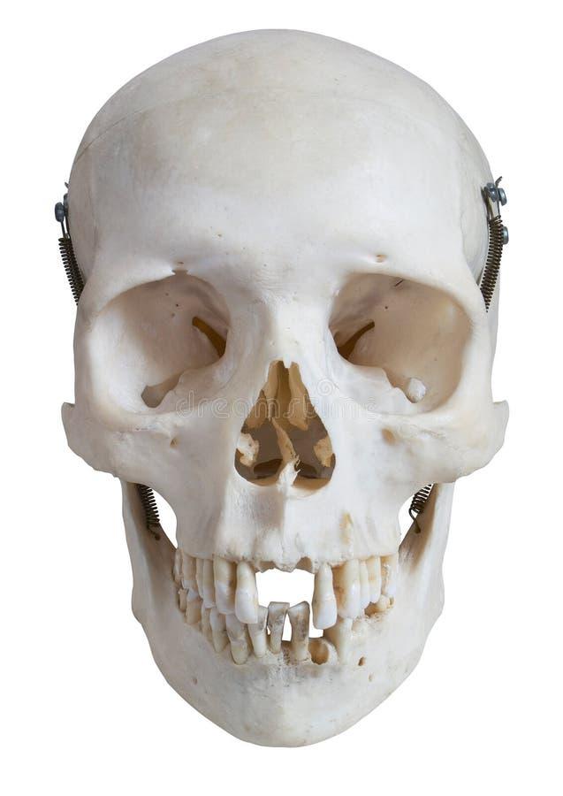 fästande ihop frontal mänsklig banaskallesikt arkivbild