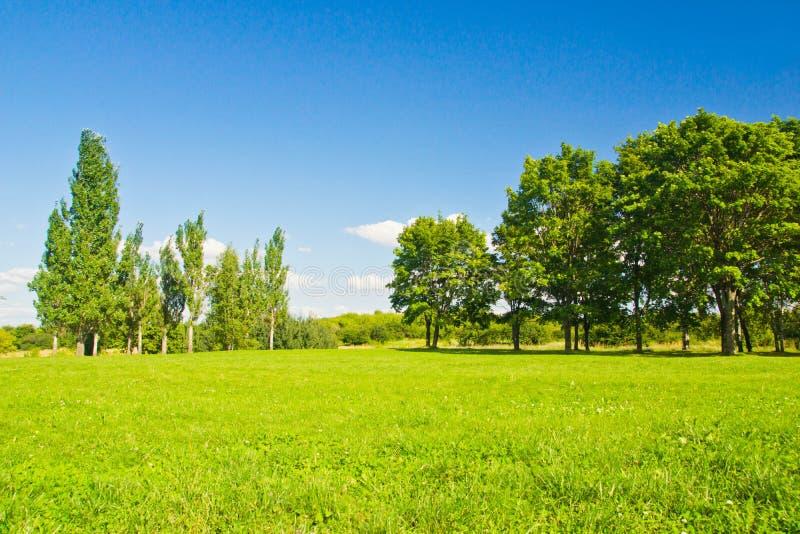 Få träd på skogen kantar på sommardag arkivbilder