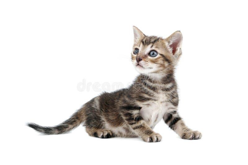 få upp kattungen royaltyfri foto
