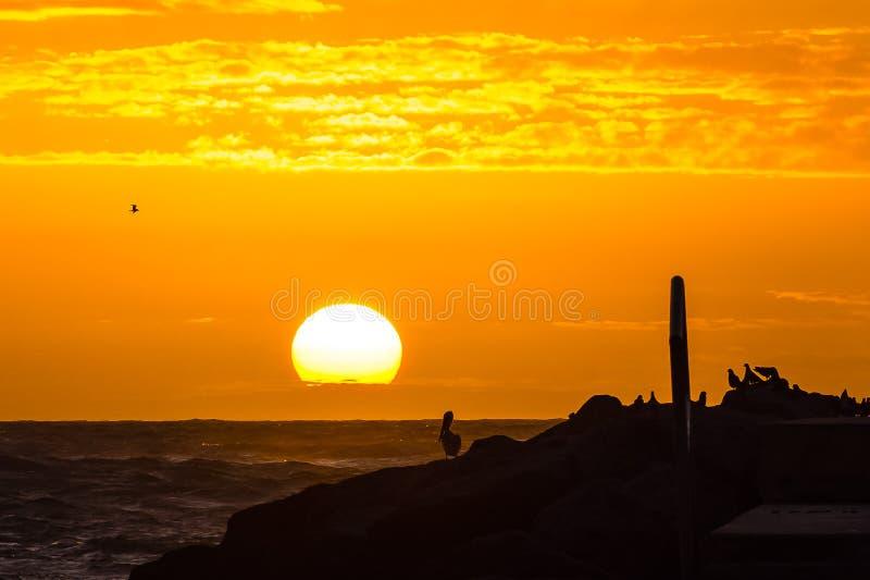 Fågel-åskådare på soluppgången arkivfoton