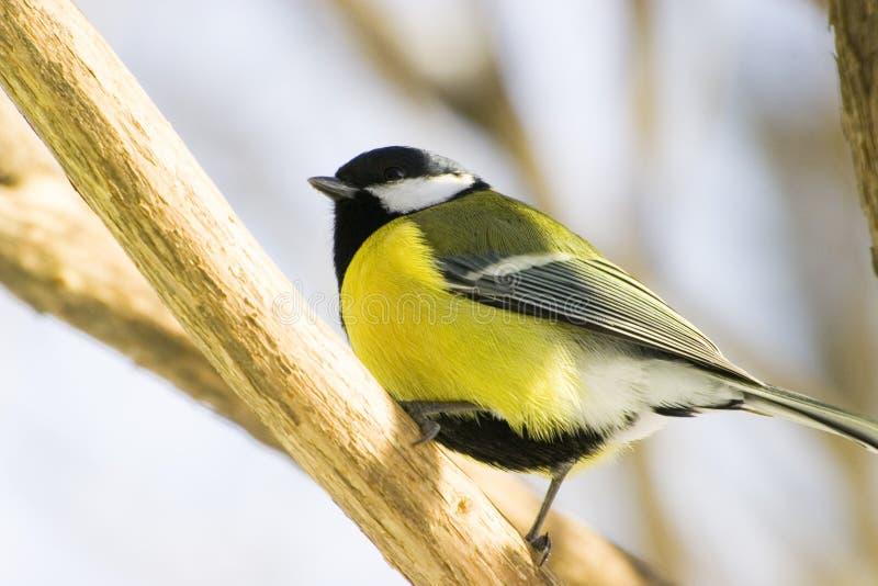 fågel royaltyfri fotografi