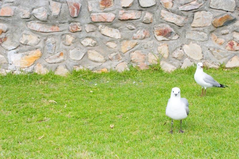 Download Fågel 9 fotografering för bildbyråer. Bild av seagull, vitt - 280767