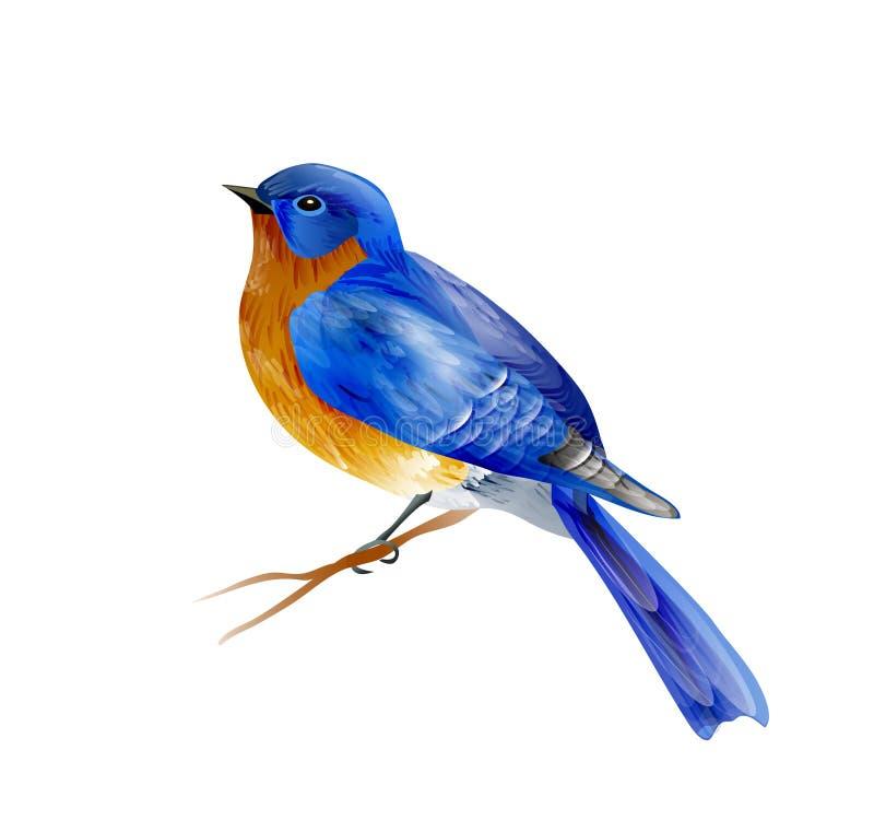 Fågel av vårvektorn vektor illustrationer