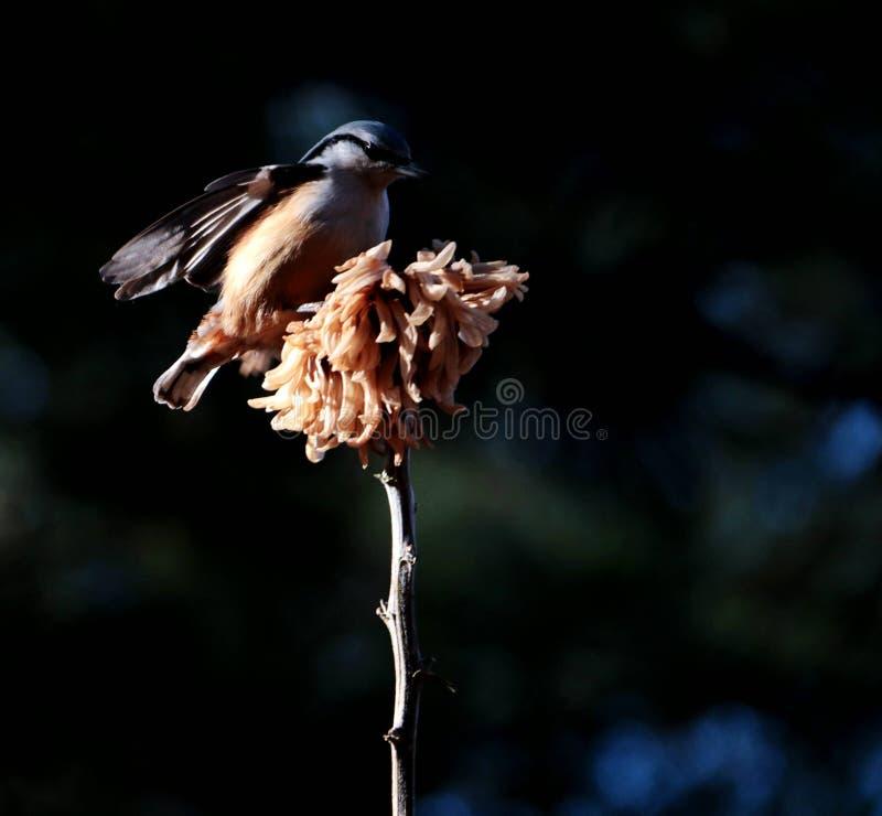 Fågel; ett efternamn royaltyfria bilder