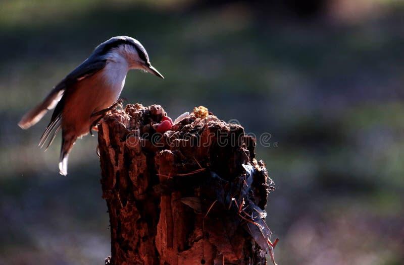 Fågel; ett efternamn royaltyfri foto
