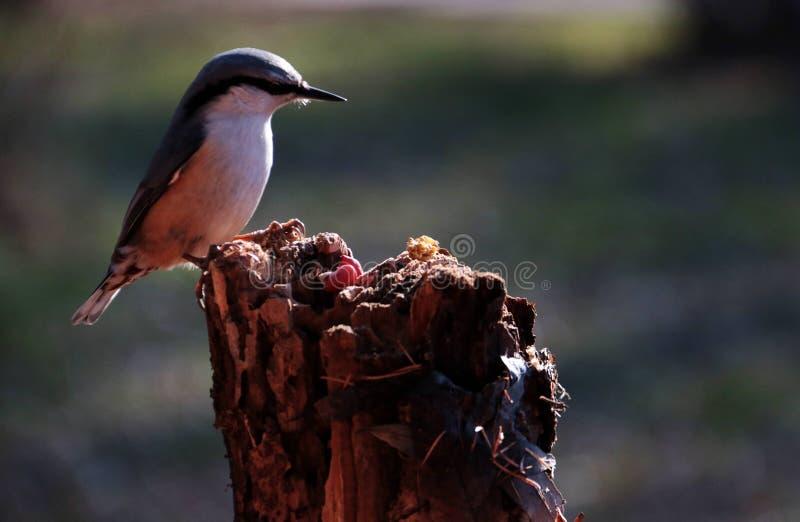 Fågel; ett efternamn royaltyfria foton