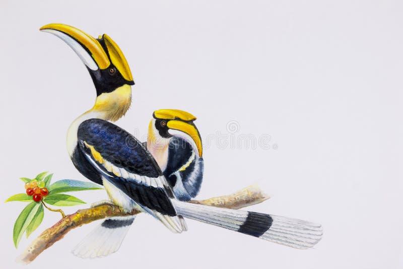 Fågel för vattenfärgmålningHornbill stock illustrationer