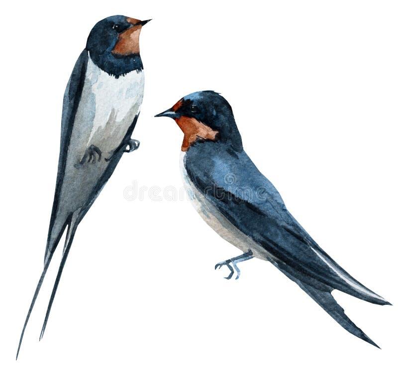 Fågel för vattenfärgrastersvala vektor illustrationer