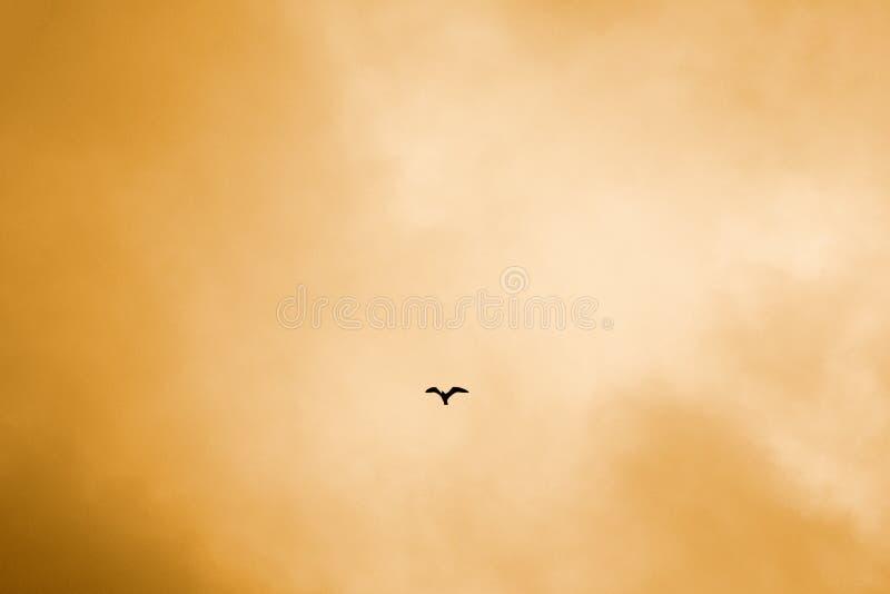 fågel i den orange himlen arkivbild