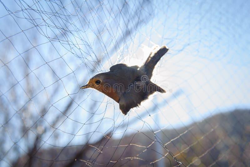 Fågel i det netto royaltyfria bilder