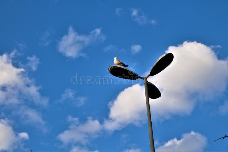 Fågel i gatalampa arkivfoto