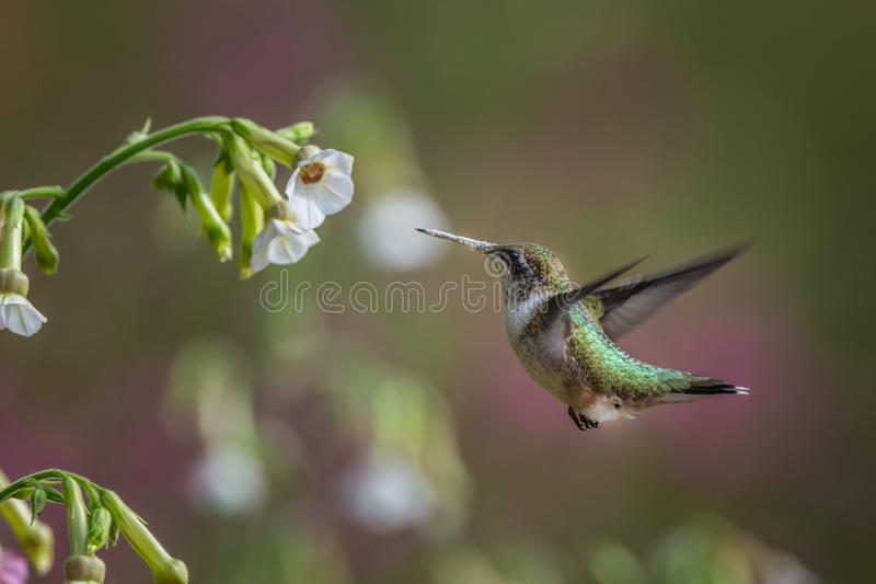 Fågel i natur royaltyfria bilder