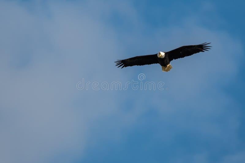 Fågel i natur fotografering för bildbyråer