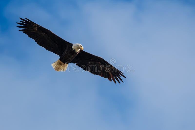 Fågel i natur royaltyfria foton