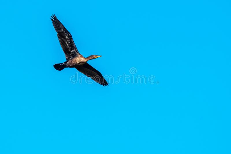 Fågel i natur royaltyfri bild