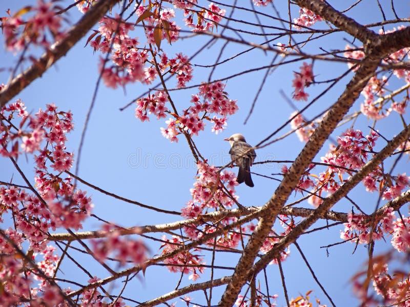 Fågel i natur med den härliga blomningen royaltyfri fotografi