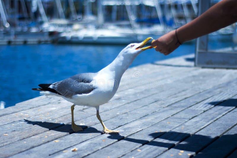 Fågel i parkera av Barcelona Spanien fotografering för bildbyråer