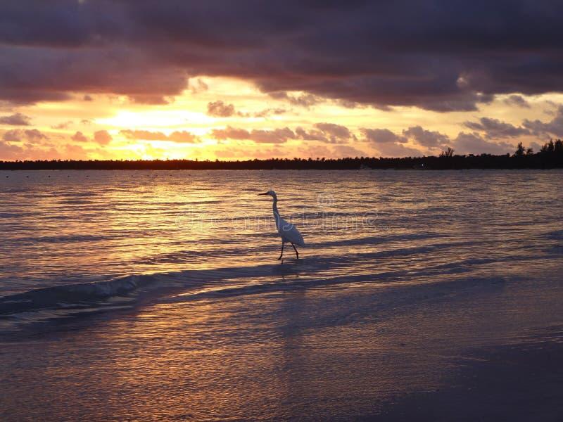 Fågel i solen arkivbilder