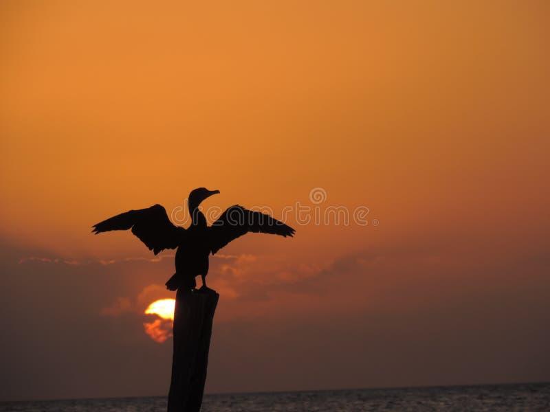 Fågel i solnedgång royaltyfri fotografi