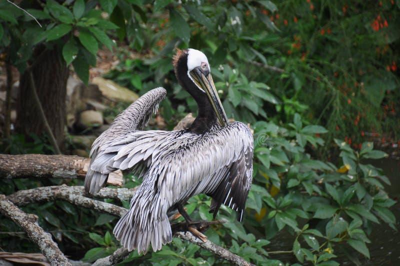 Fågel i zoo av Cali, Colombia royaltyfri foto