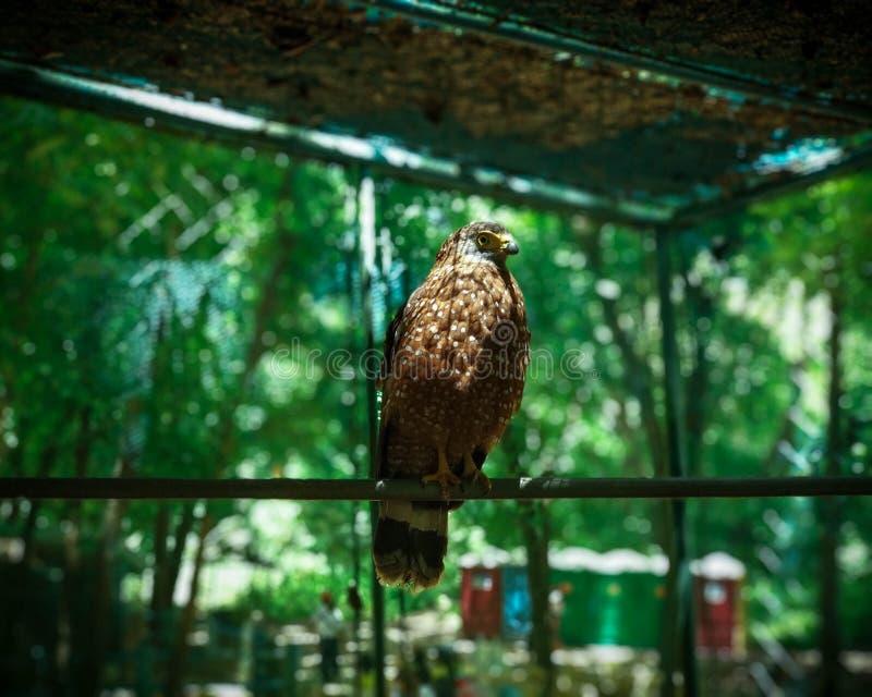 Fågel inom en bur royaltyfri foto