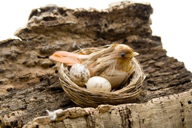 Fågel med ägg i redet arkivfoto