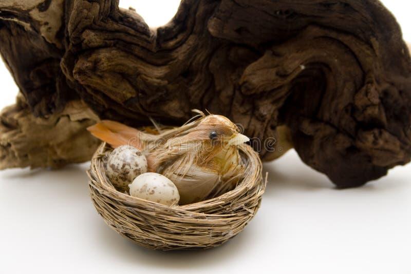 Fågel med ägget i bygga bo arkivbilder