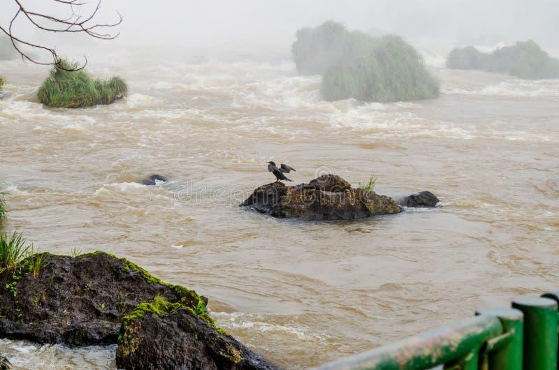 Fågel med öppna vingar som badar på kanten av en vattenfall royaltyfri foto