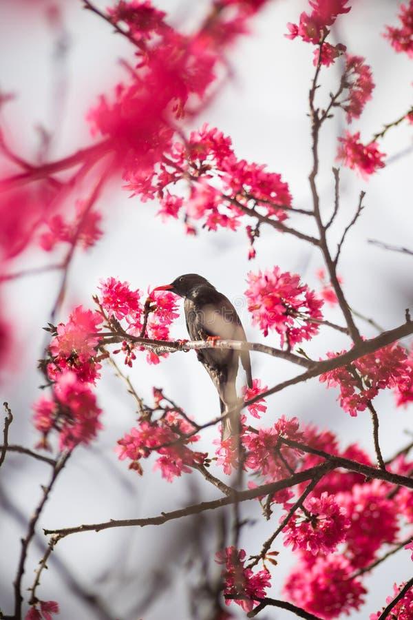 Fågel med blomningen arkivbild