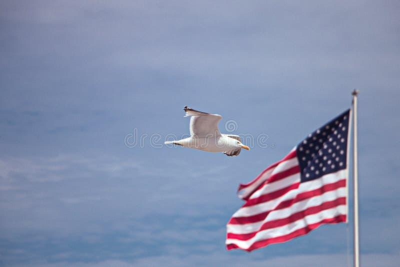 Fågel och amerikanska flaggan royaltyfria bilder