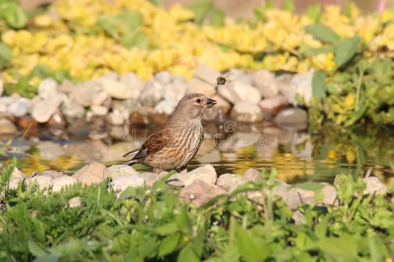 Fågel- och bimöte med vatten royaltyfria bilder
