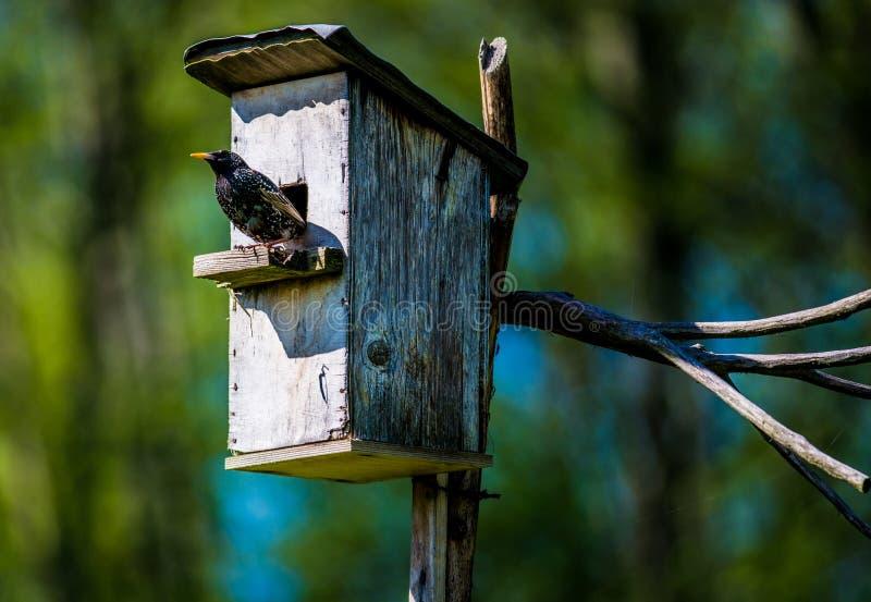 Fågel och bygga boask fotografering för bildbyråer