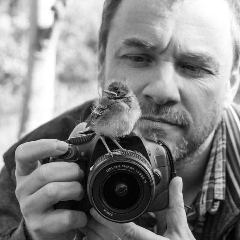Fågel och fotograf royaltyfria foton