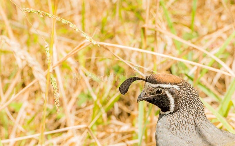 Fågel och gräs royaltyfri bild