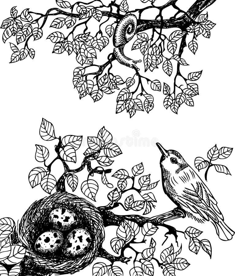 Fågel- och snigelsvart vektor illustrationer