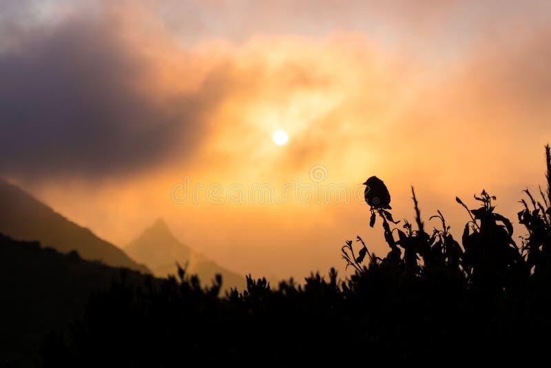 Fågel och soluppgången arkivfoto