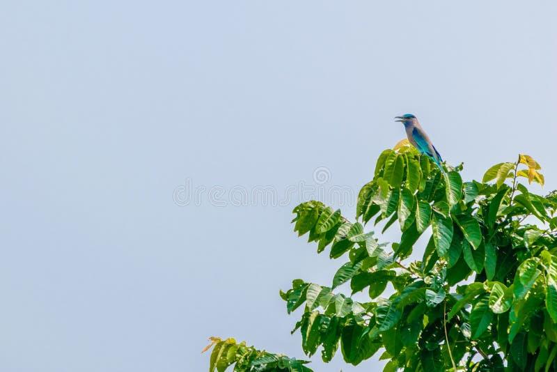 Fågel på att sitta på trädfilial arkivbild
